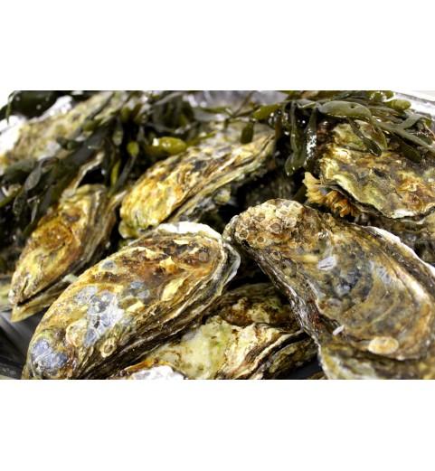 Grevelinger oesters ( 6 stuks )